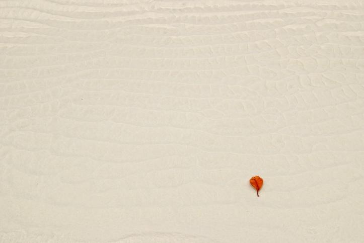 beach with orange leaf