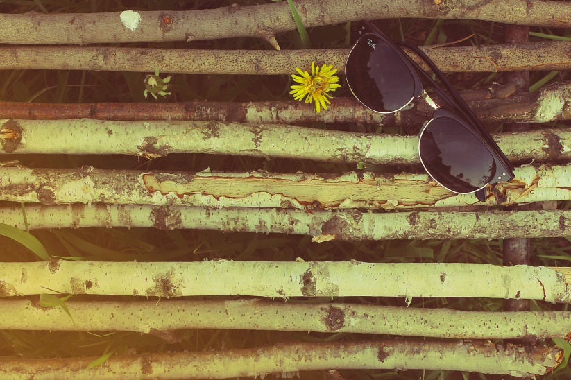 wood-with-sunglasses-and-dandelion