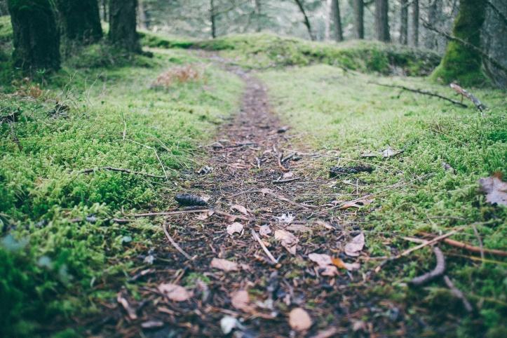 dirt-path-through-woods