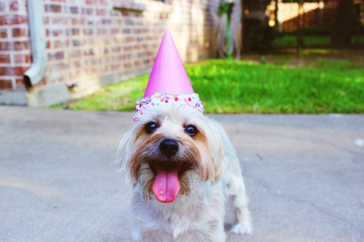 Dog in birthday hat.jpg