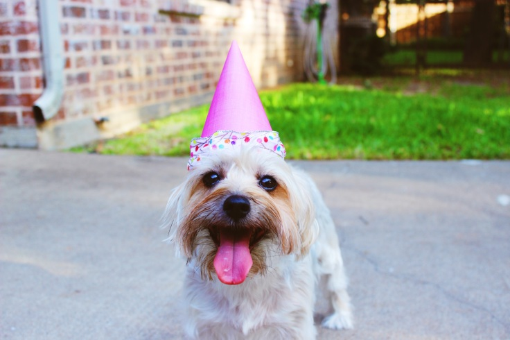 Dog in birthday hat.jpg